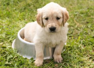 Hundehütte kaufen